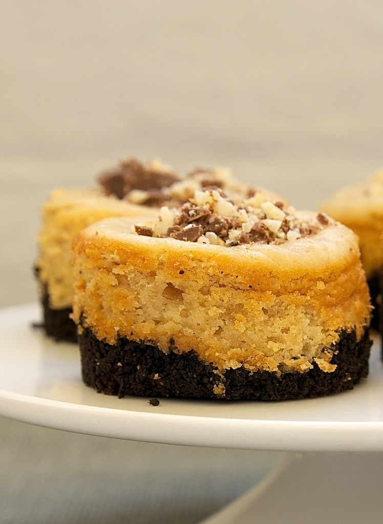 Peanut Butter Mini Cheesecakes with Chocolate Cookie Crust on a white pedestal