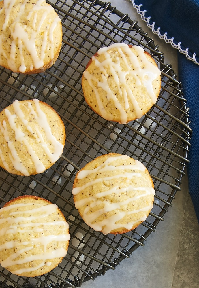 Triple Citrus Poppy Seed Muffins cooling on a wire rack