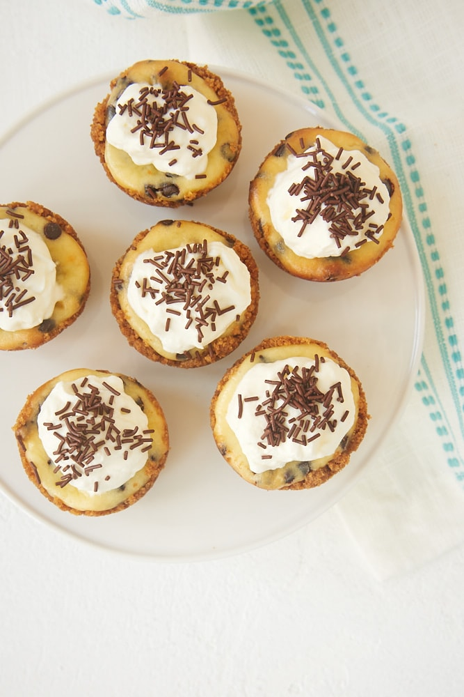Chocolate Chip Cheesecakes topped with whipped cream and chocolate sprinkles